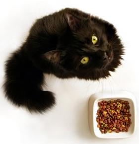 Catfood[1]